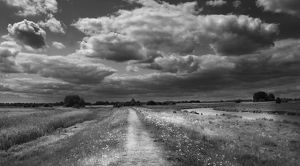 Path along edge of Lakenheath RSPB Reserve Suffolk in summer