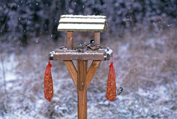 Garden birds including Nuthatch and Blue Tits on bird table in winter, Kent, UK