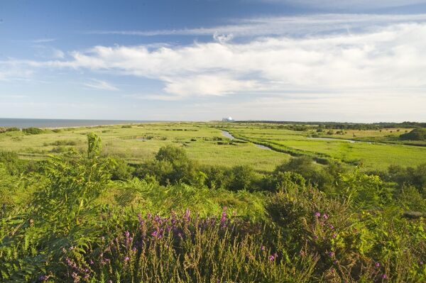 View across Minsmere RSPB Reserve from Dunwich Suffolk July