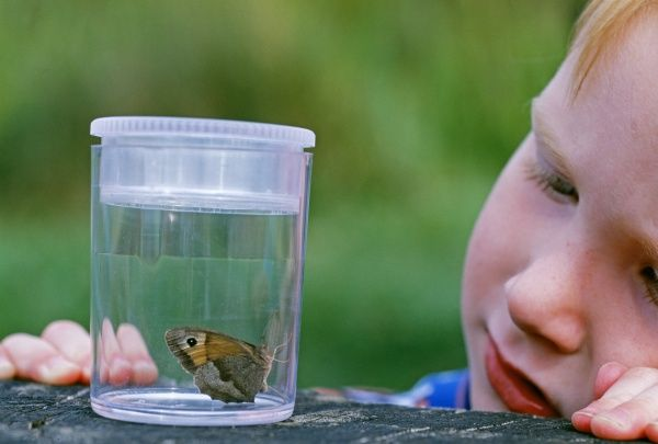 young boy looking at butterfly, Kent, summer
