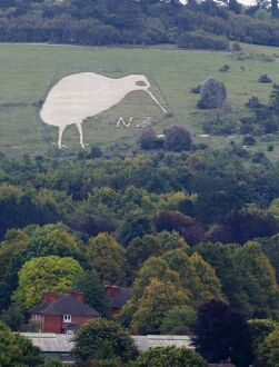 Chalk Kiwi on Beacon Hill above Bulford Wiltshire Kiwi was constructed to commemorate